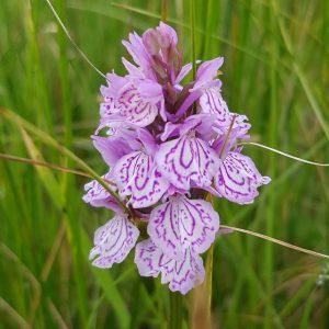 OrchidBenderlochSelfCatering