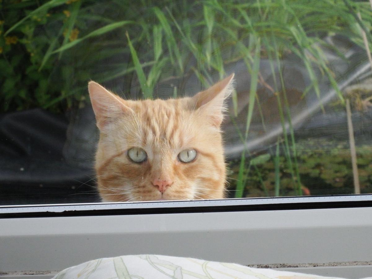caorunn window DSCF4070 cat