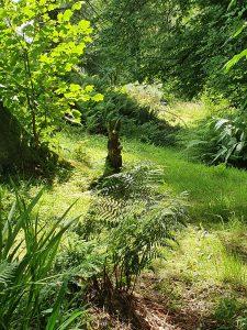 Argyll's Blooming Gardens