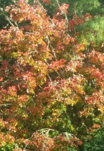 autumn 20171009_154321 autumn colour