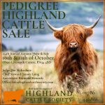 oban highland cattle show and sale